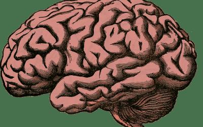 Uma leitura para um alongamento mental